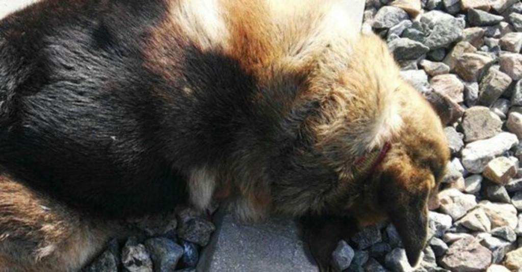 Escandaliza las redes muerte de perros en España