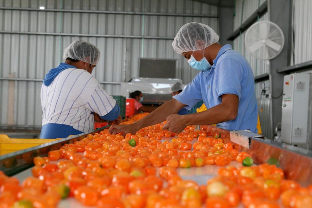 Chile Habanero en la industria farmacéutica