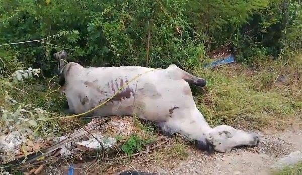 Encuentran caballos muertos en un terreno