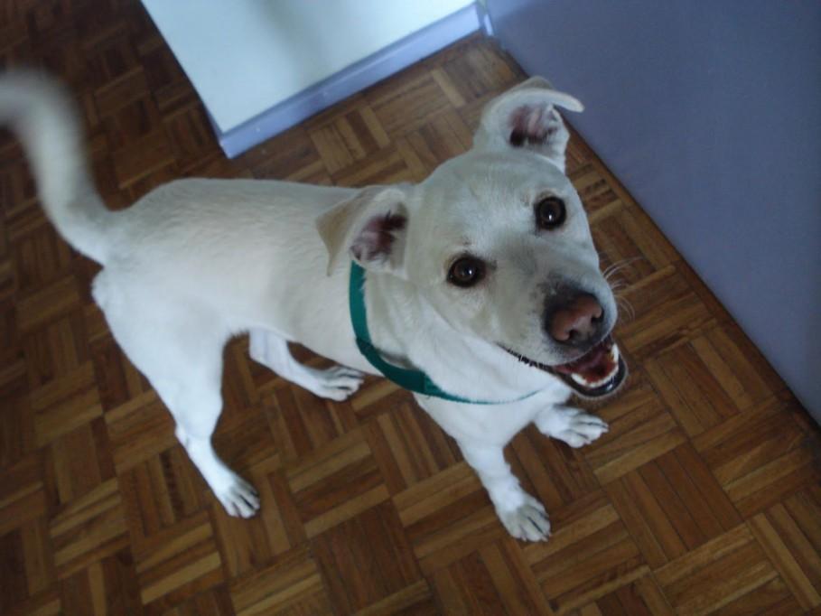 """""""Malix"""", el perro más común en la Península"""