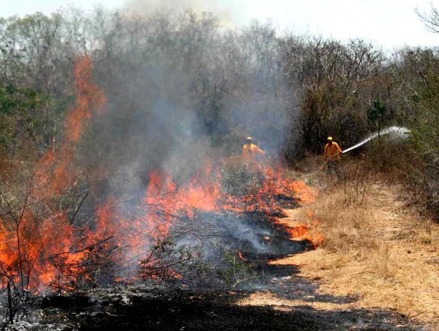Más de mil hectáreas siniestradas en Yucatán
