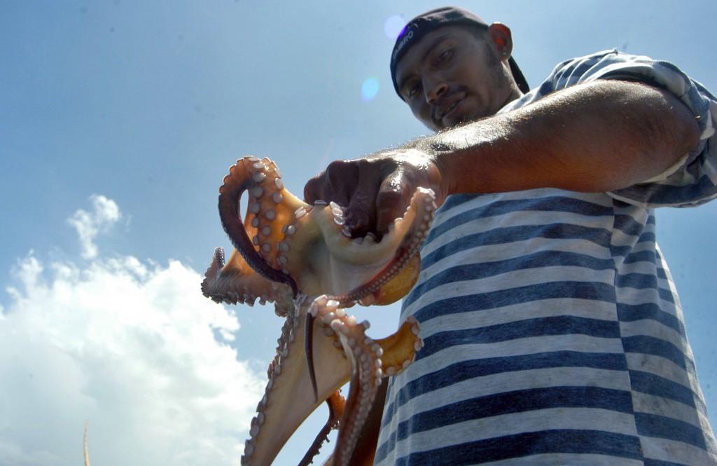 Pulpo, principal pesquería de Yucatán