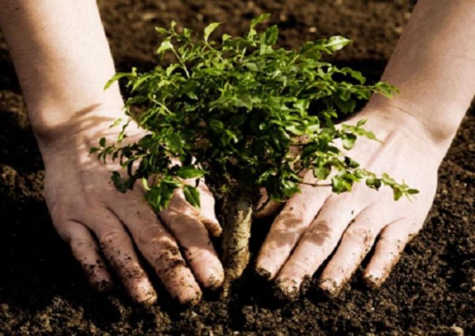 Programa de arborización en estacionamientos y espacios públicos