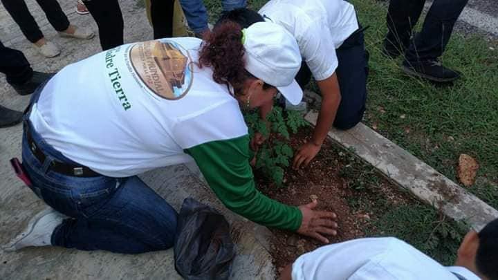 Reforestan y arborizan distintos espacios de Valladolid