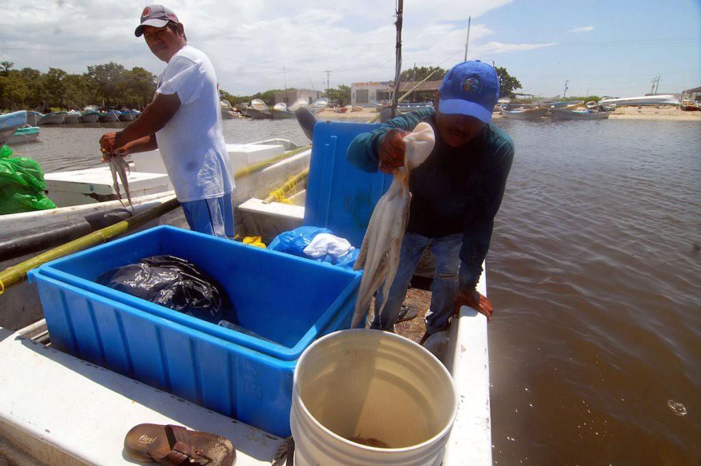 """Debido al """"furtivismo"""" la pesca disminuye en la costa yucateca"""