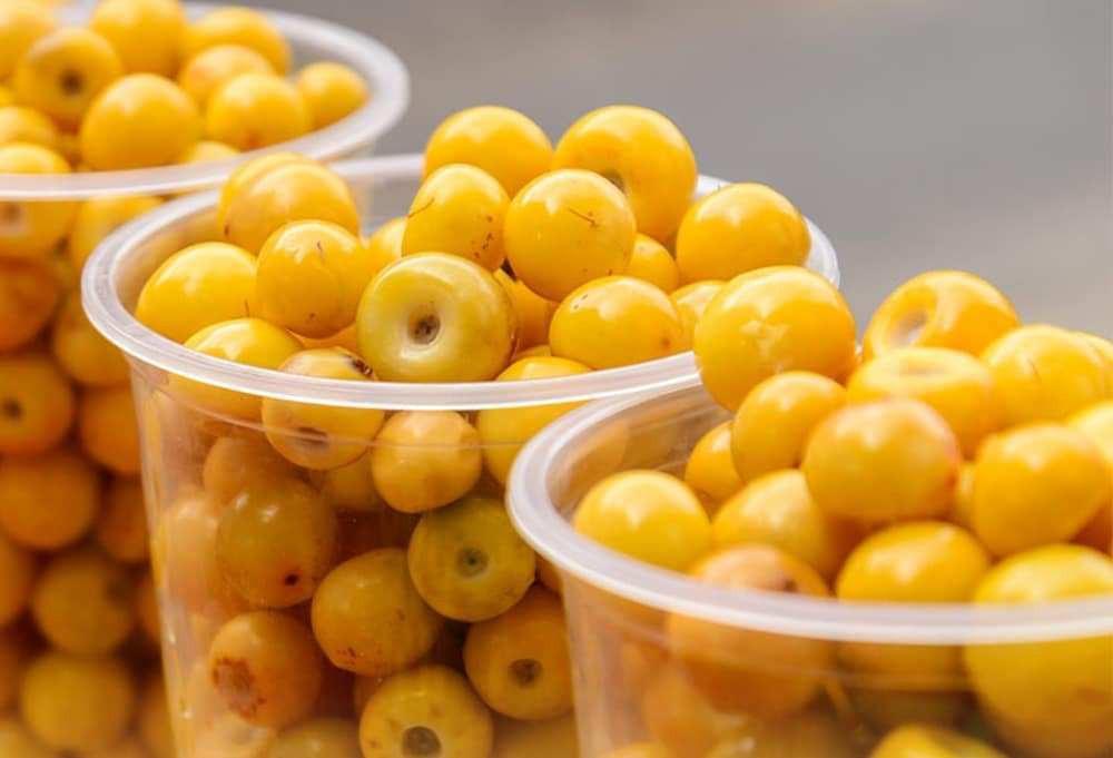 El amarillo del nance viste los mercados de Mérida