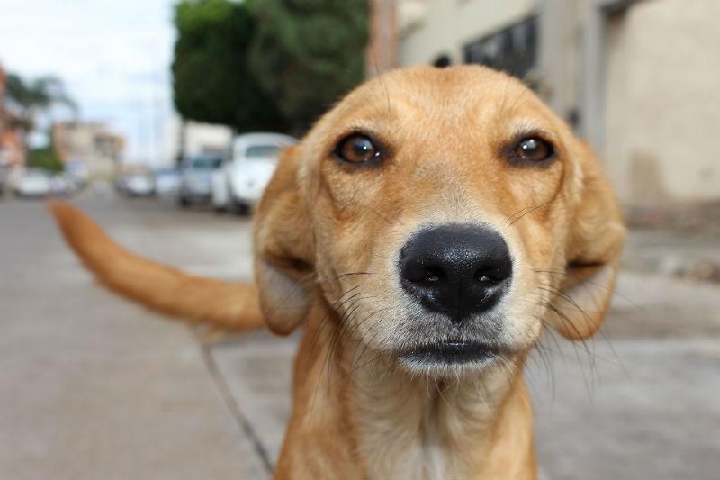 Preocupa sobrepoblación de perros y gatos