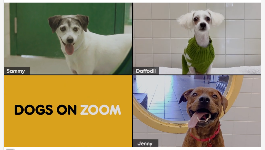 "En Estados Unidos crean ""Dogs on Zoom"""
