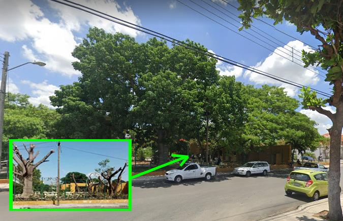 Por seguridad cortaron árboles en la Prepa 2, afirman autoridades de la UADY