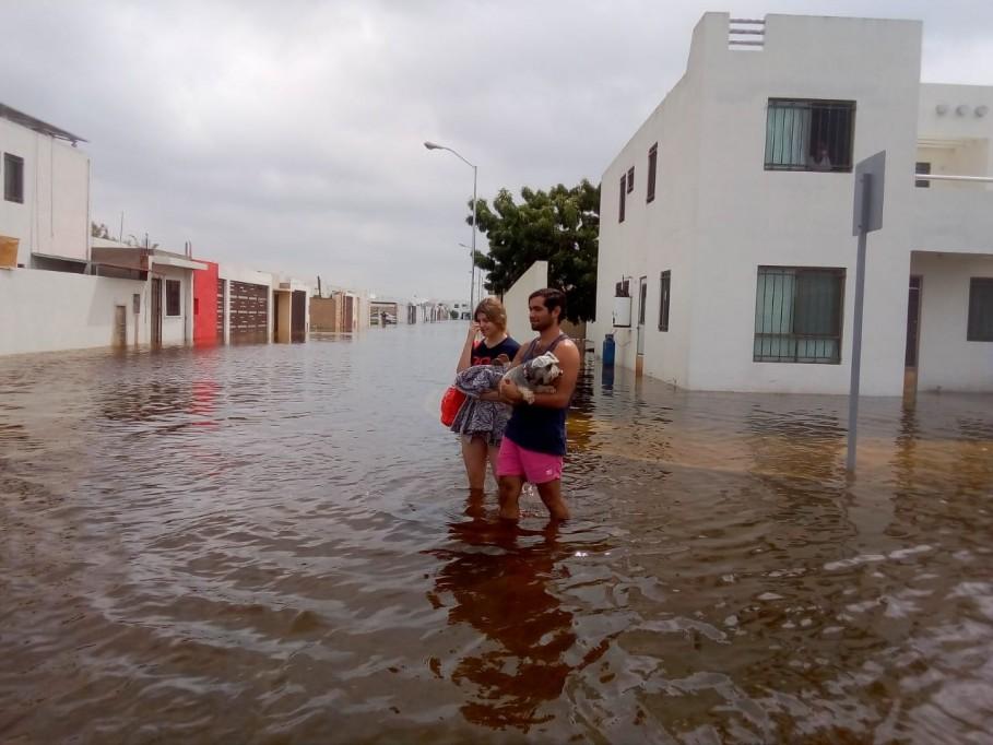 Con más áreas verdes se podrían evitar inundaciones