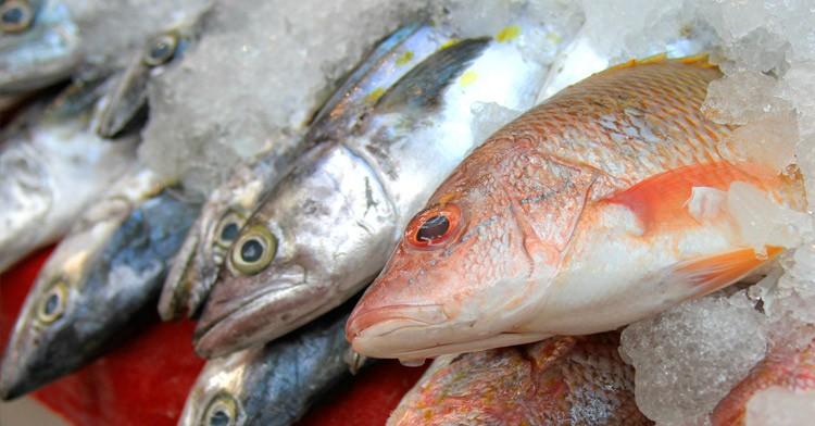 Esperanza ante reanudación de la temporada de pesca de mero