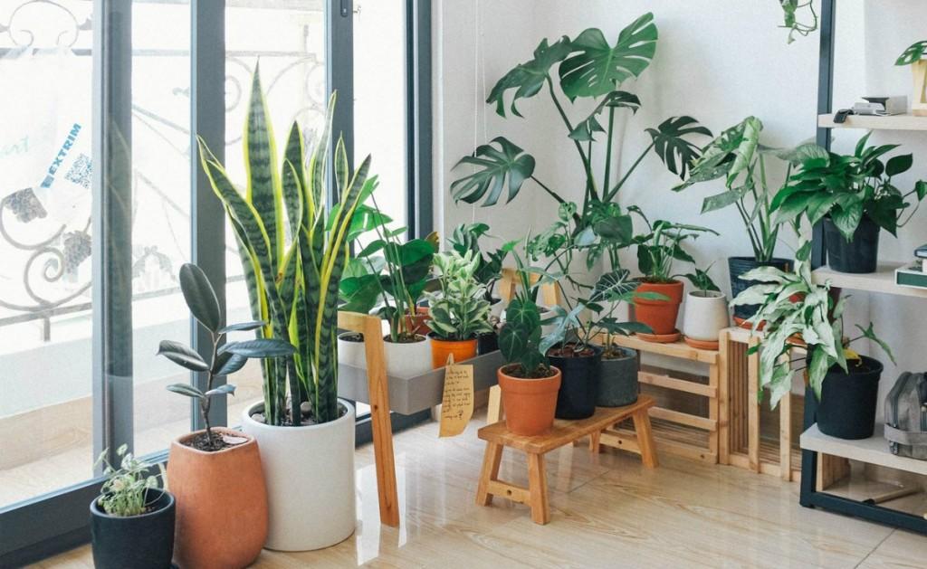 Recomiendan tener plantas o árboles en casa para combatir las altas temperaturas