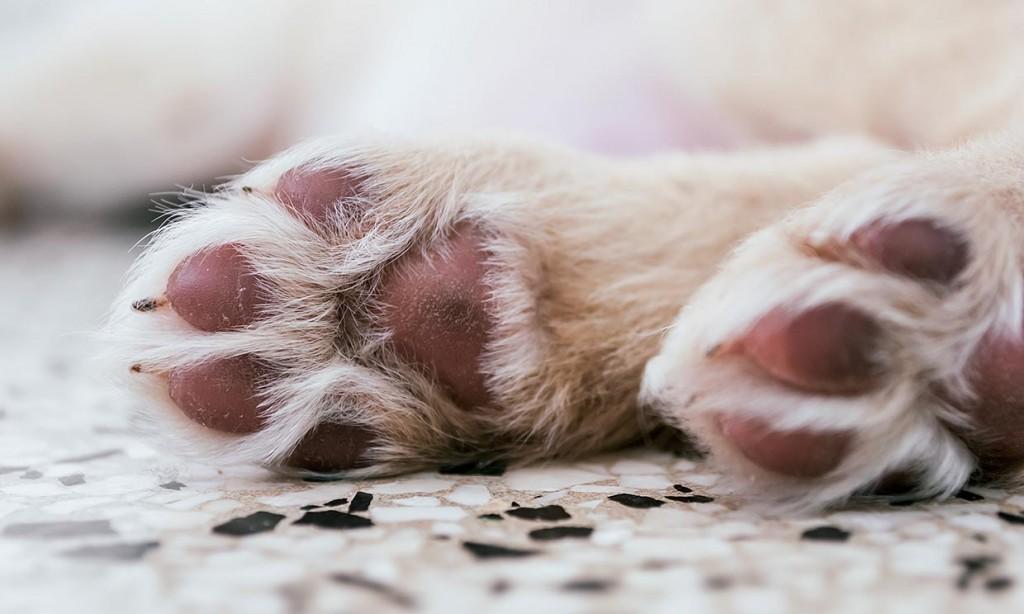 Los perros son susceptibles a quemaduras; exhortan a no exponerlos de 10 am a 6pm