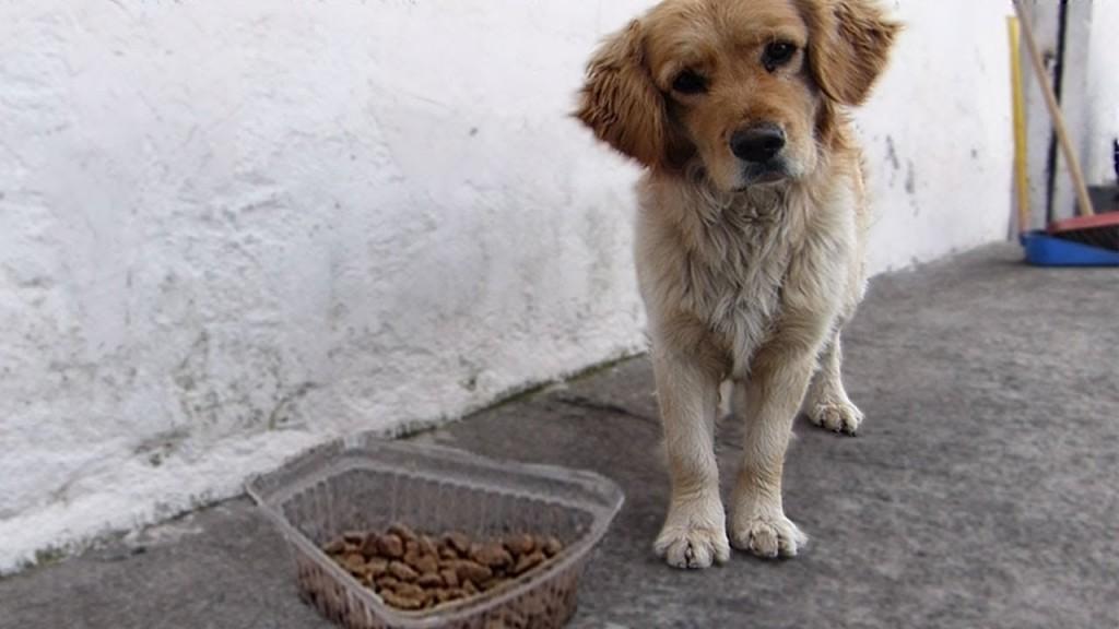"""""""No está prohibido alimentar  a los animales"""""""